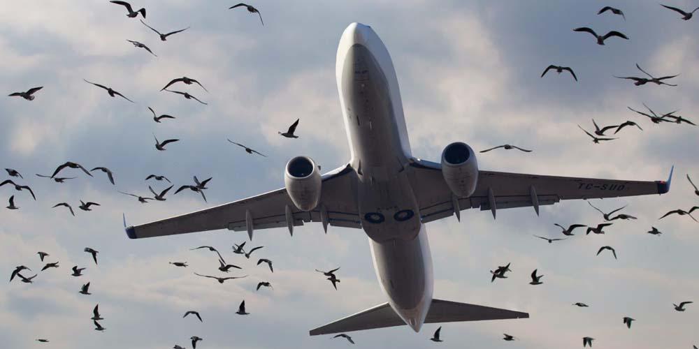 Авиалайнер польского перевозчика Enter Air столкнулся с птицей