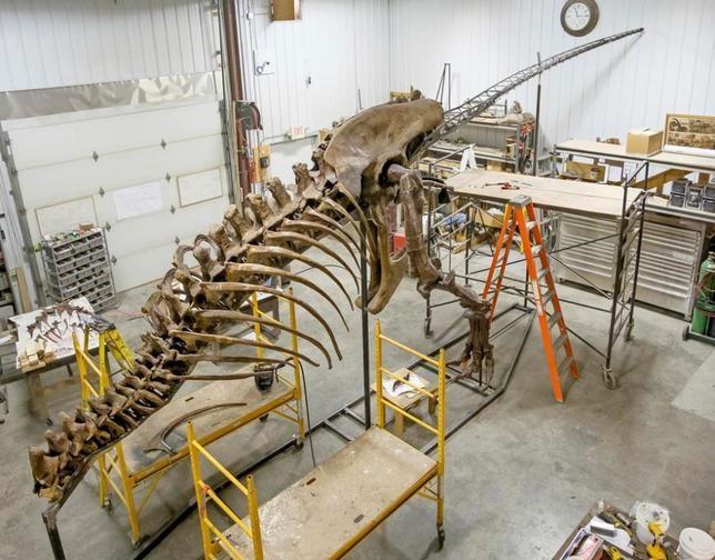 3 - T-rex, Rolls-Royce, тигры и произведения искусства. Не только обычные пассажиры летают на самолете