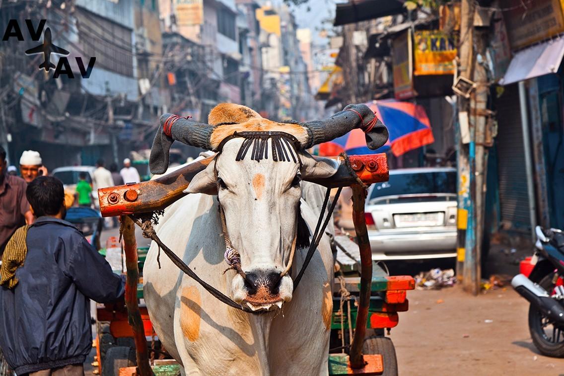 Deli - Путешествие в Индию