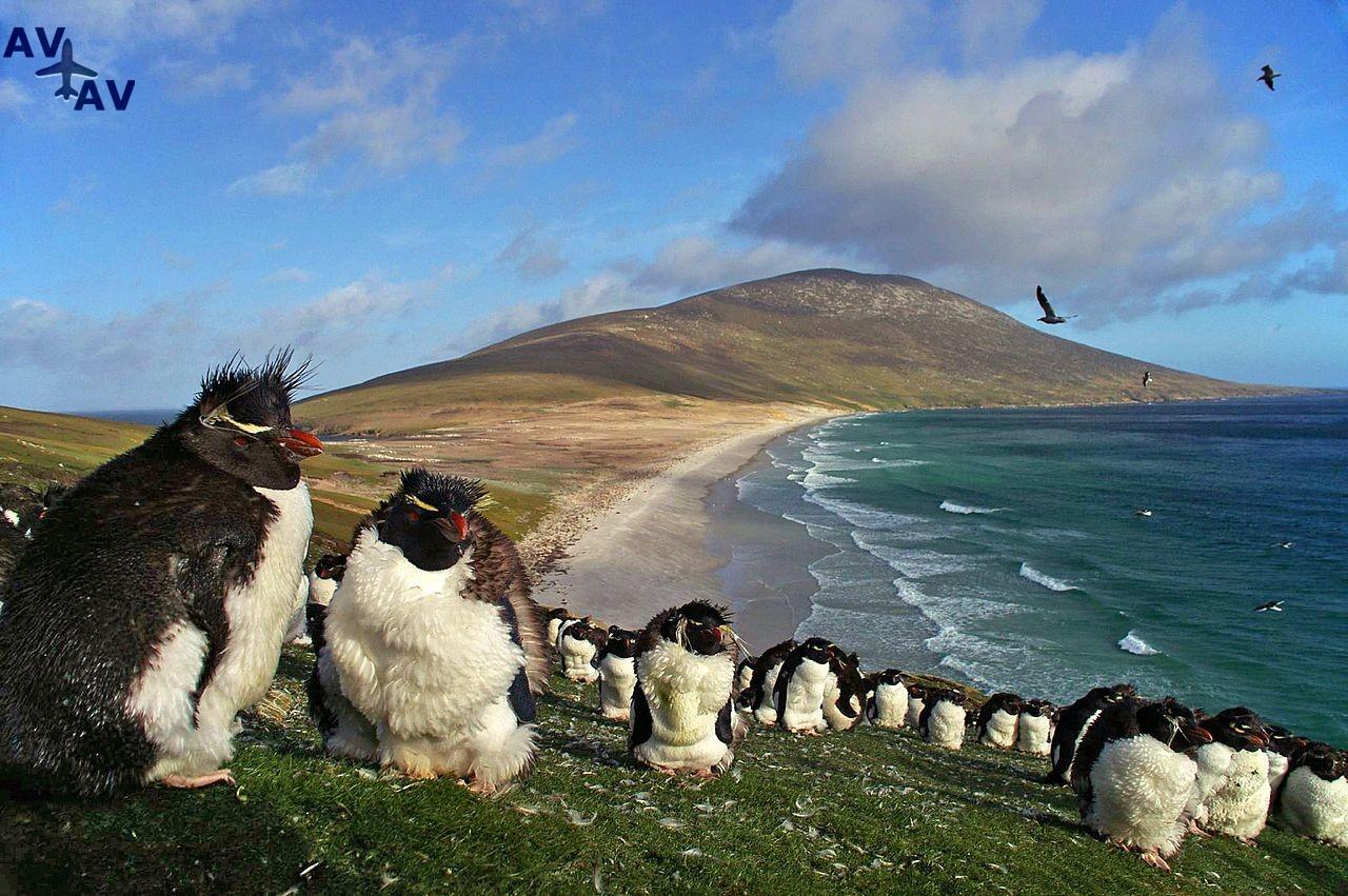 Folklendskie ostrova kolyibel prirodyi2 - Фолклендские острова - колыбель природы