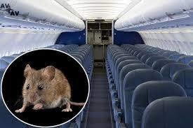 scorpions - Мыши и скорпионы - самые необычные причины задержек рейсов в уходящем году