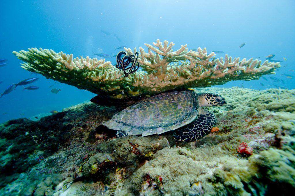 coral 2141013 1920 1024x683 - Отдых на Мальдивах - купить билет и заказать перелет, бронирование отеля на Мальдивах