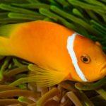 fish 2141022 1920 150x150 - Дешевые авиабилеты - купить на сайте