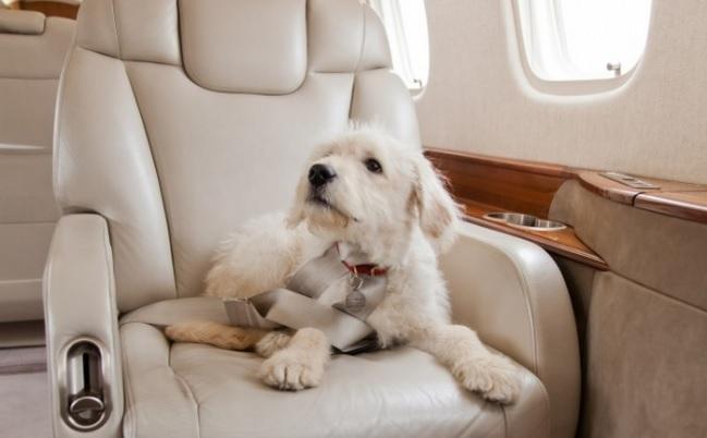 10 правил полетов на частных самолетах