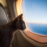 Cat on Jet 600x400 150x150 - Авиакомпания Qantas заморозила попугая за 4110 долларов